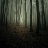 Dark woods - metaphor of depression and feeling depressed